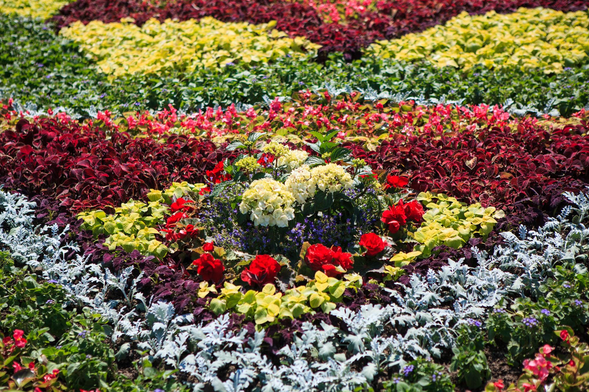 Цветы подмосковья садовые